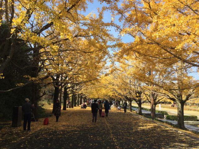 旧暦と新暦を正しく理解して日本の四季のうつりかわりを知ろう